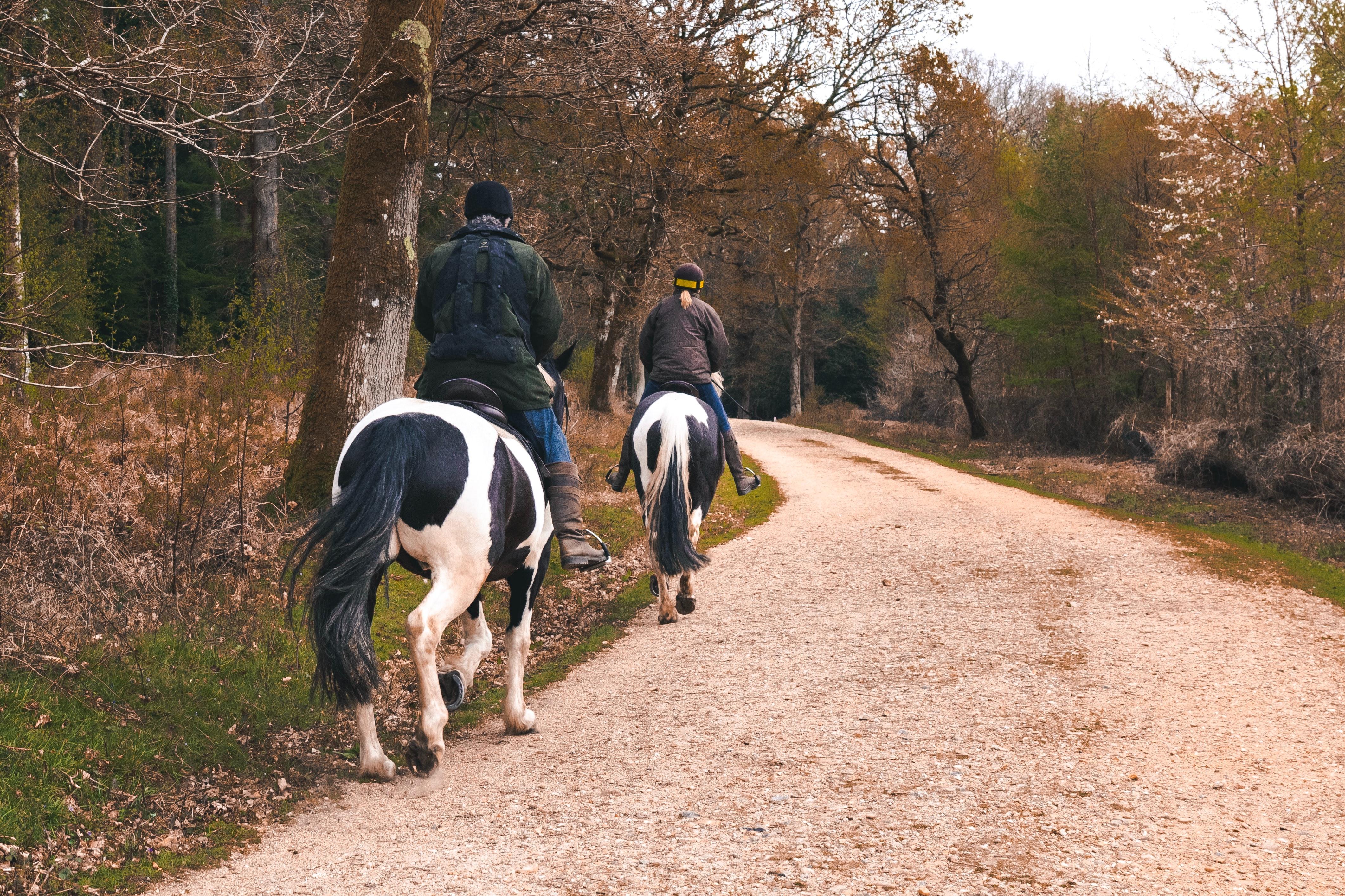 horses in road.jpg (3.38 MB)